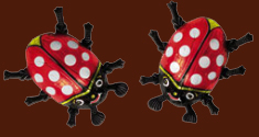 Chocolate Lady Beetles